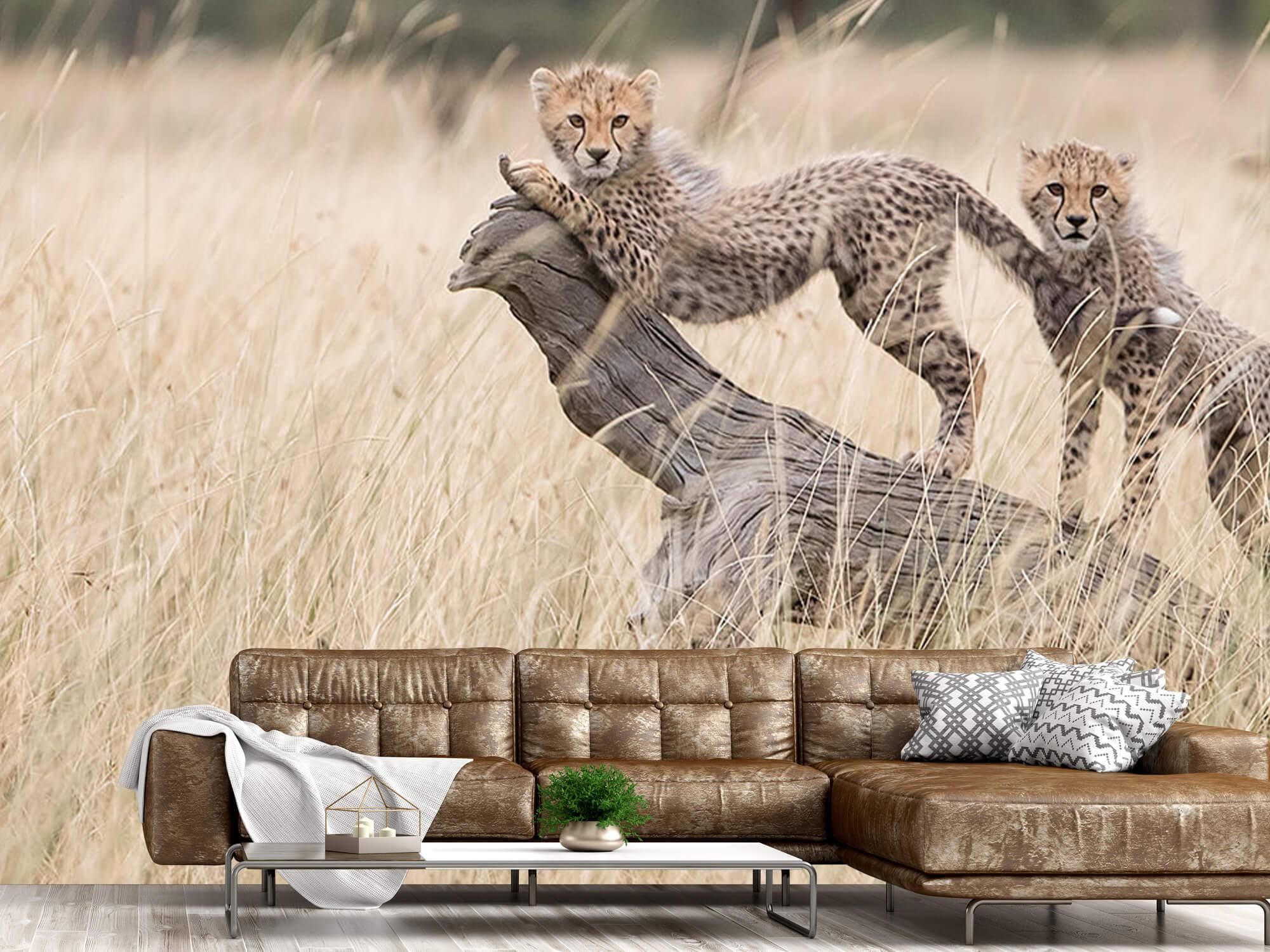 Curious Kitties 12