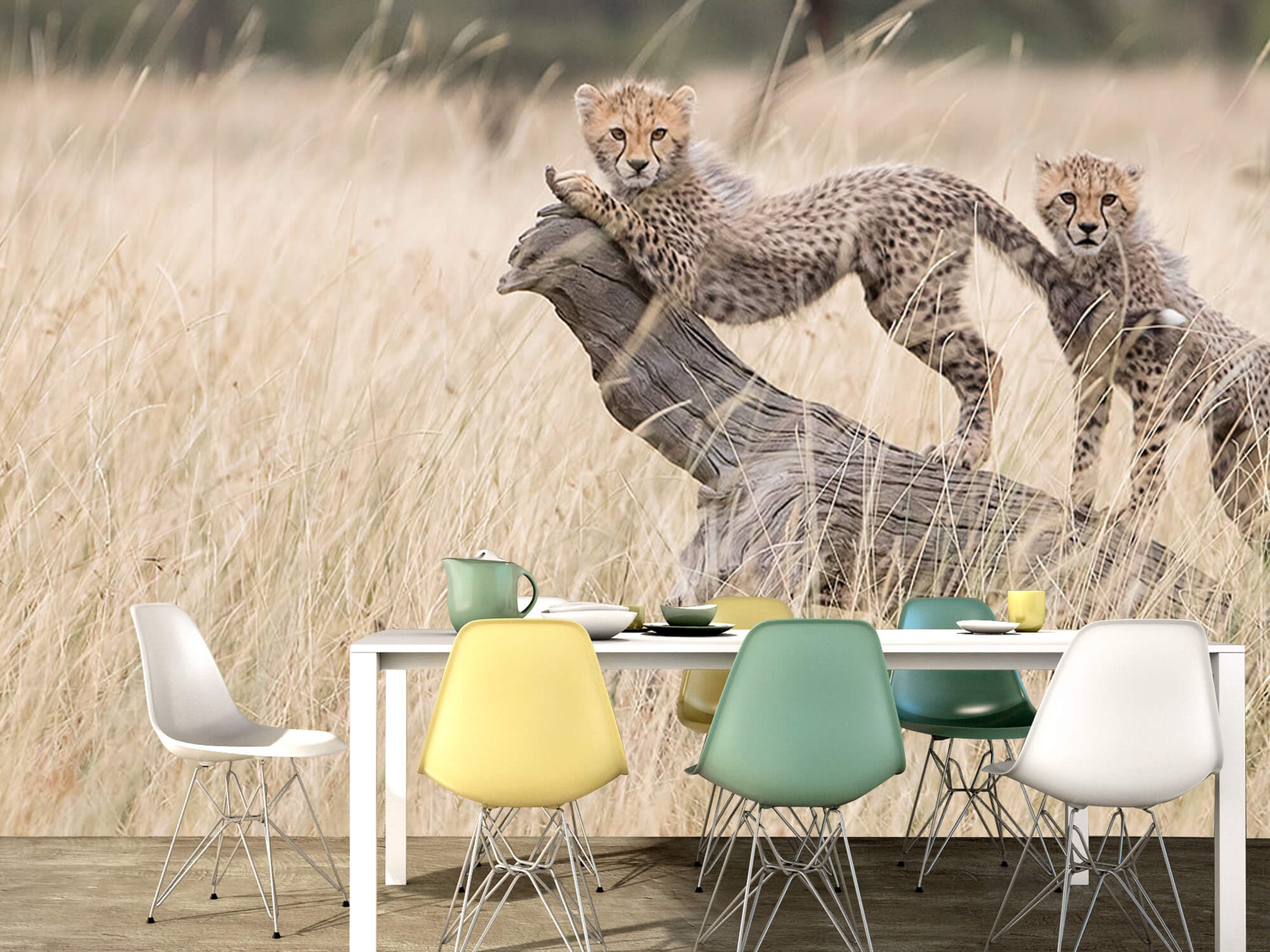 Curious Kitties 13