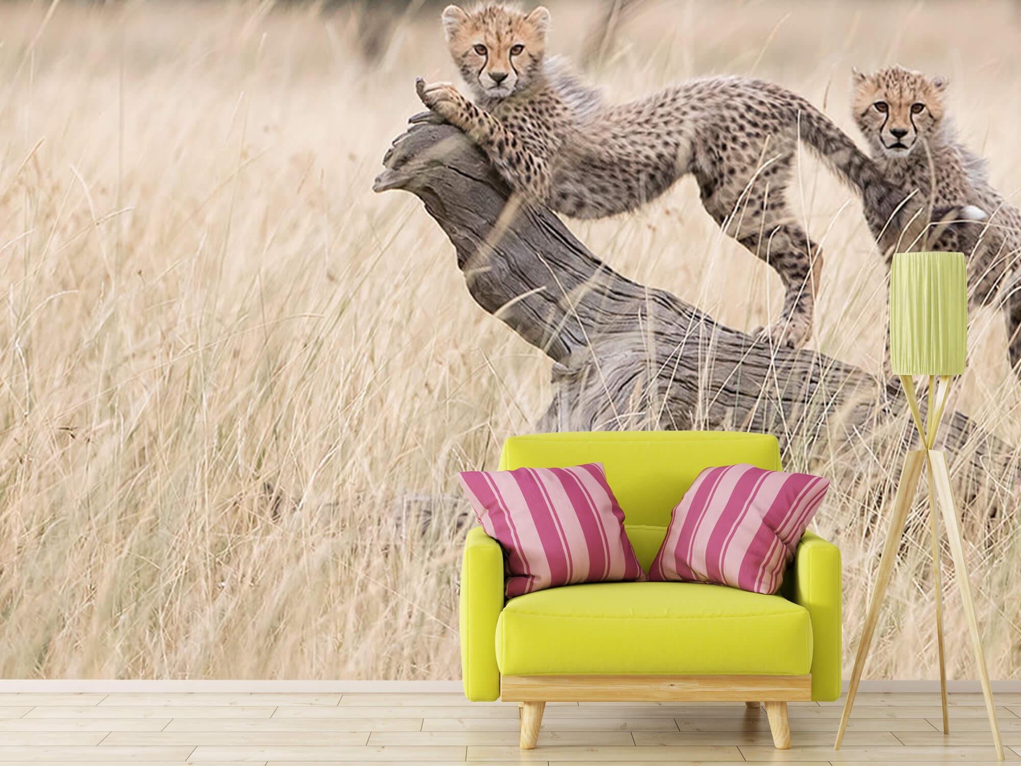 Curious Kitties 15