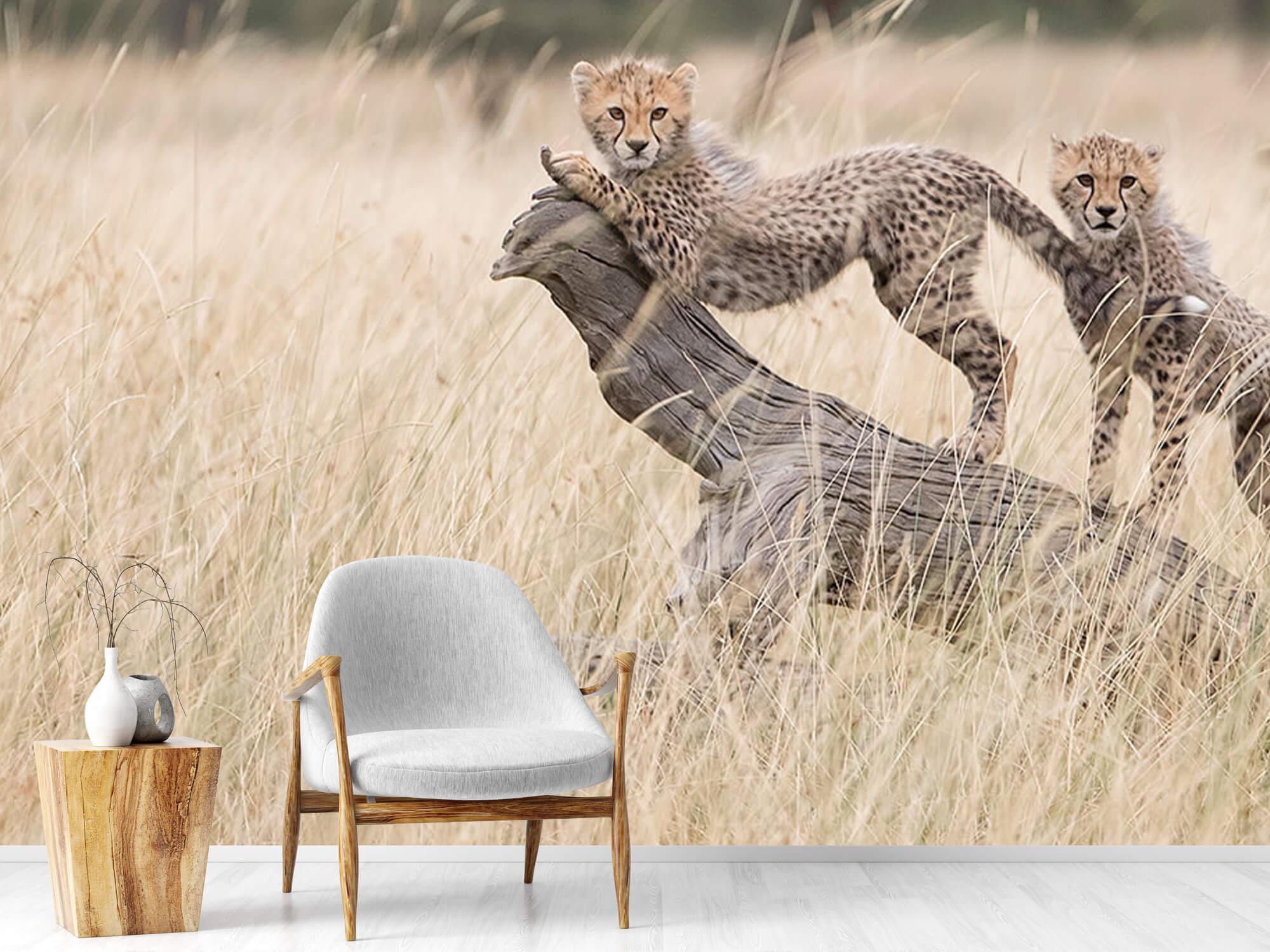 Curious Kitties 16