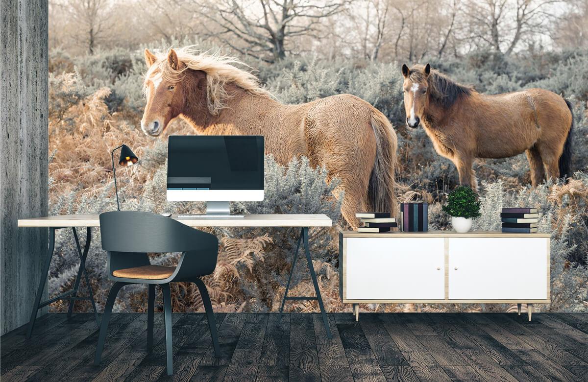 wallpaper Wilde paarden in een veld 3