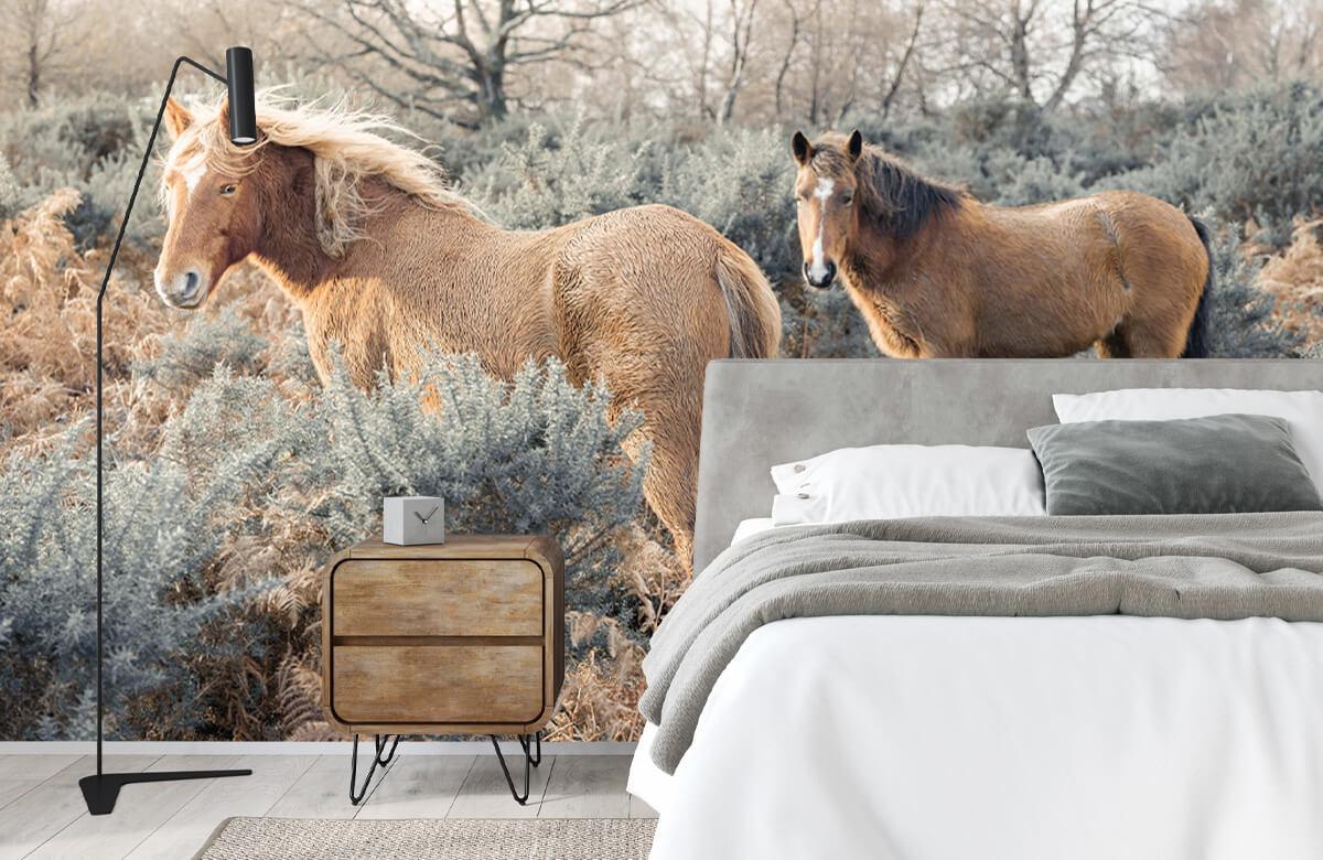 wallpaper Wilde paarden in een veld 5