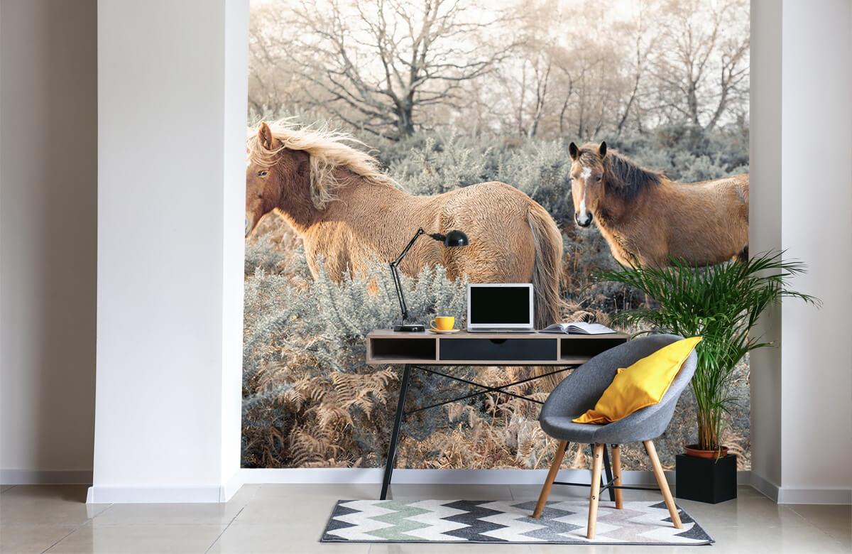 wallpaper Wilde paarden in een veld 6