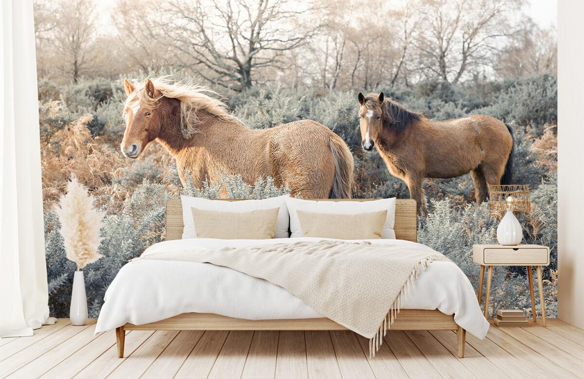 wallpaper Wilde paarden in een veld 1