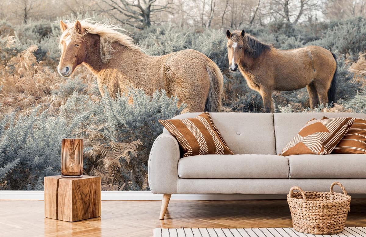 wallpaper Wilde paarden in een veld 7