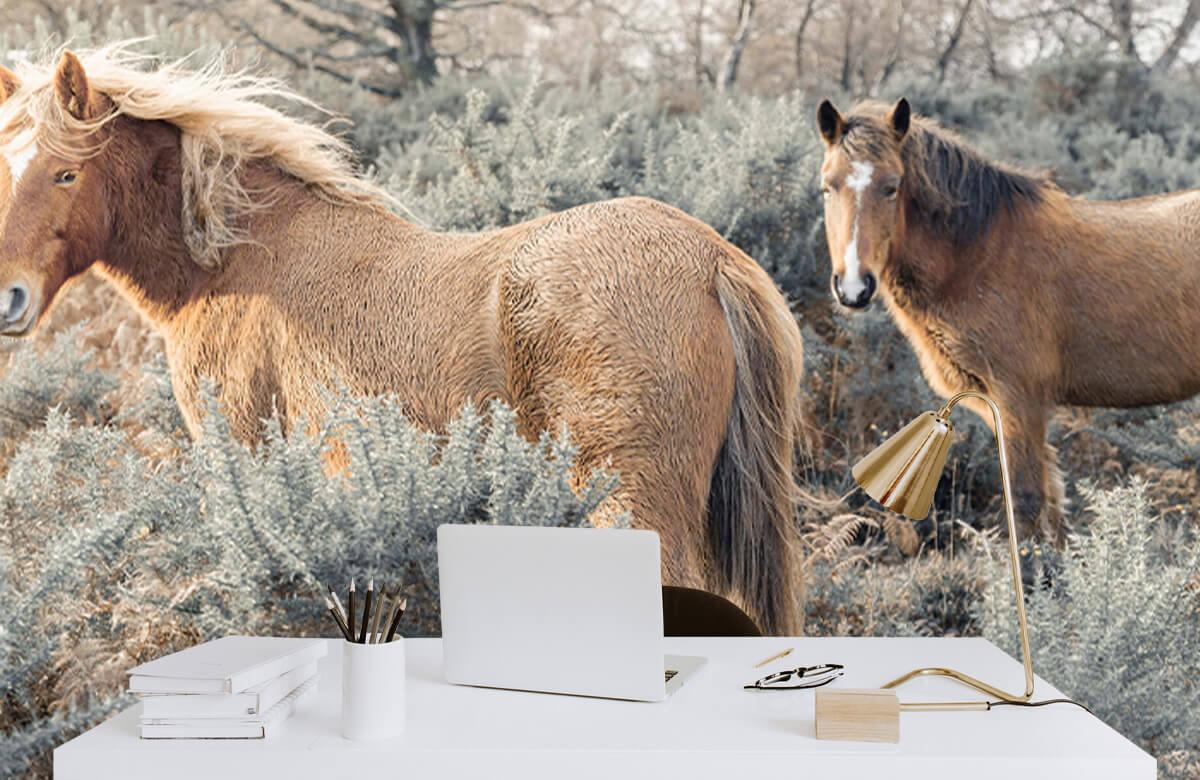wallpaper Wilde paarden in een veld 2