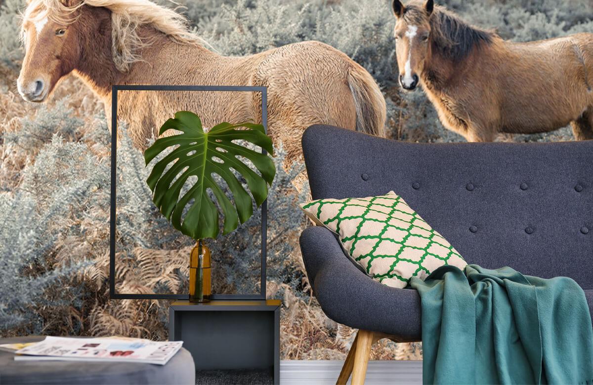 wallpaper Wilde paarden in een veld 10