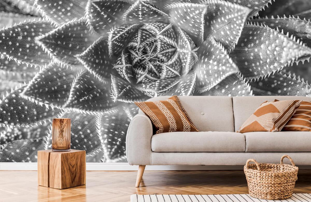 wallpaper Close-up vetplant in zwart-wit 7