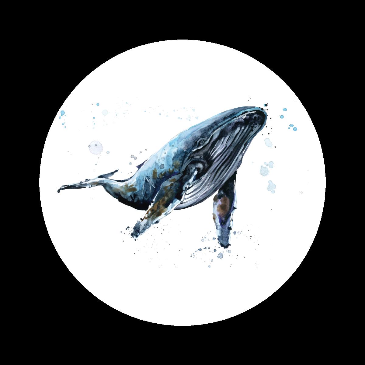 Fotobehang Behangcirkel bultrugwalvis -60 cm