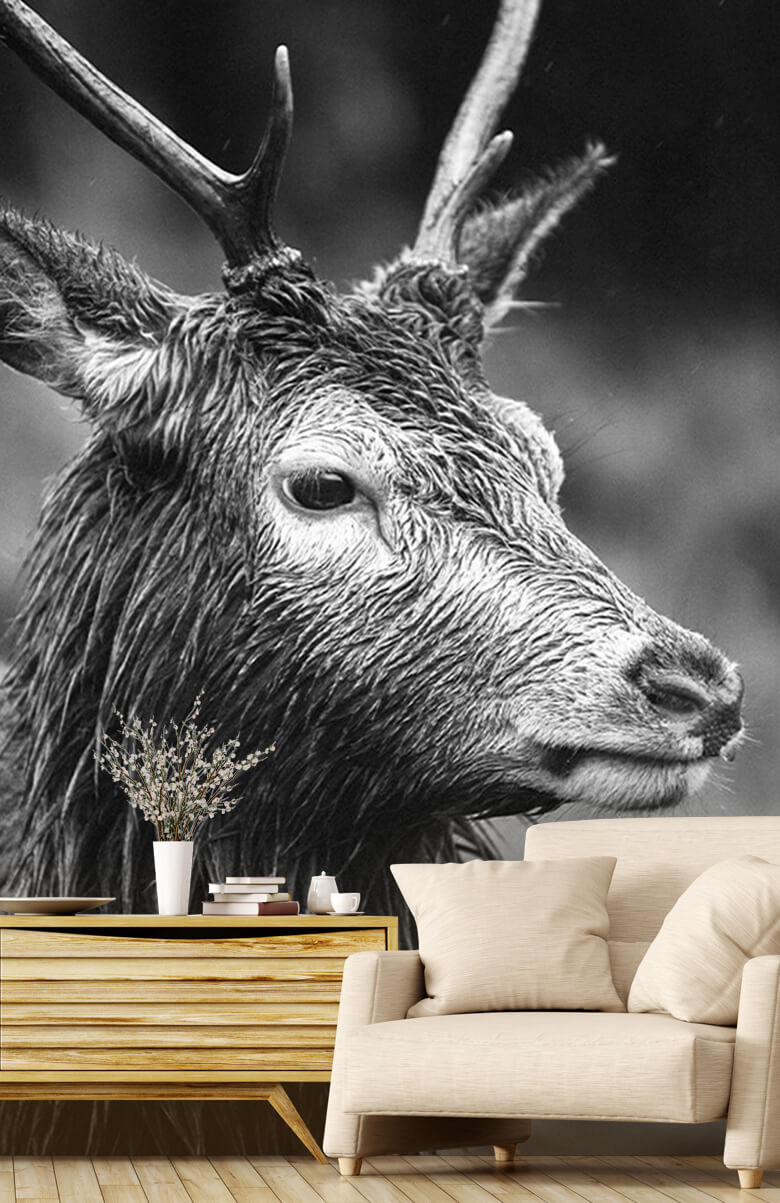Hert portret in zwart-wit 4