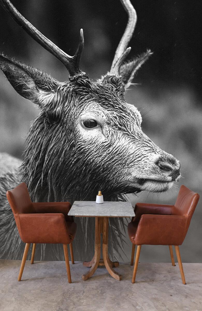 Hert portret in zwart-wit 6