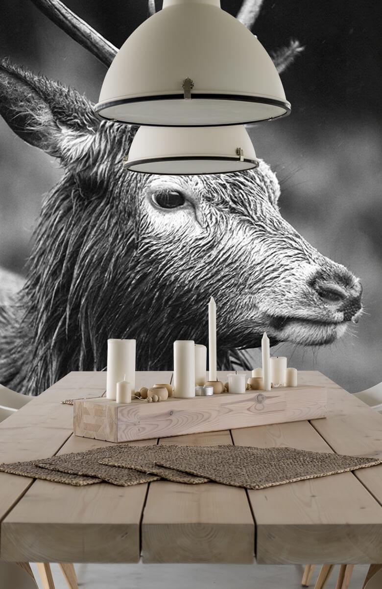 Hert portret in zwart-wit 7