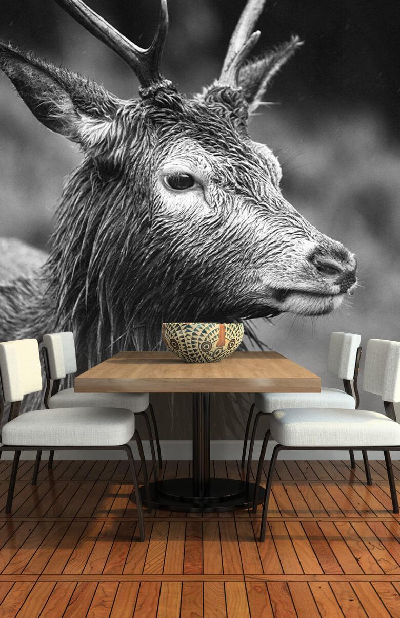 Hert portret in zwart-wit 1
