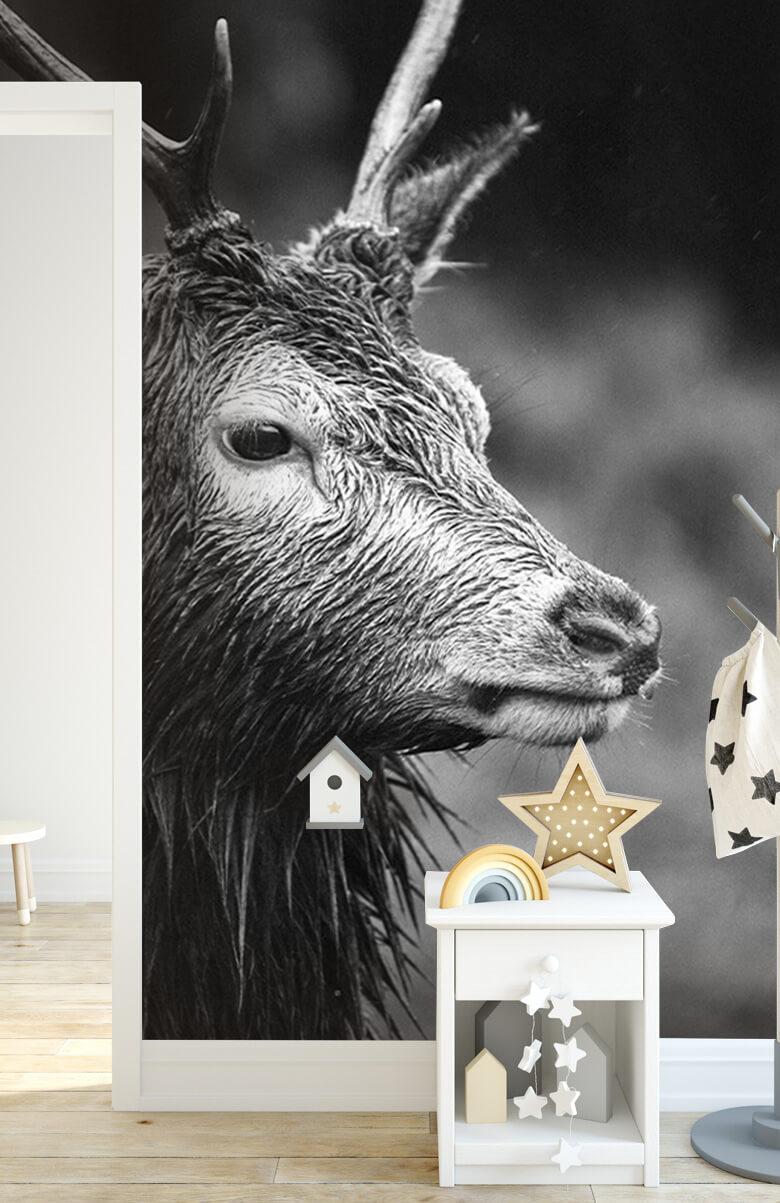 Hert portret in zwart-wit 8