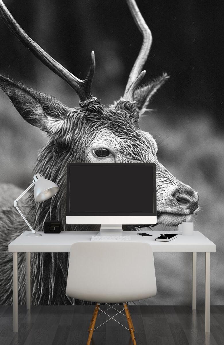 Hert portret in zwart-wit 11