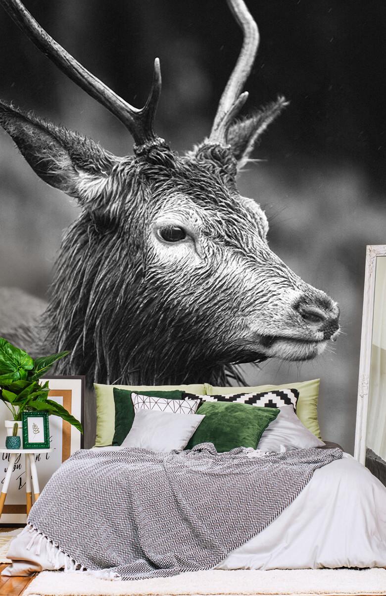 Hert portret in zwart-wit 3