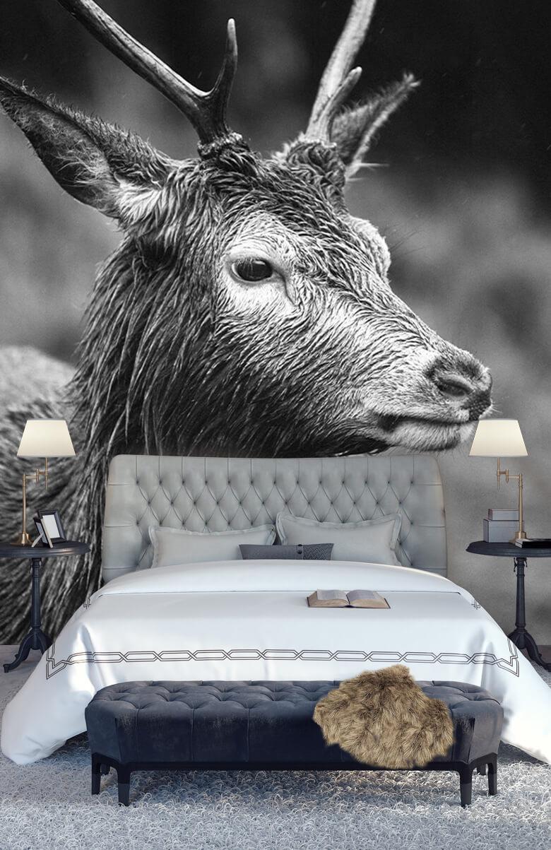 Hert portret in zwart-wit 14