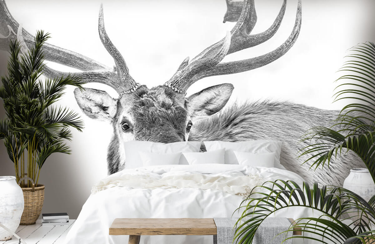 Hert op witte achtergrond 7