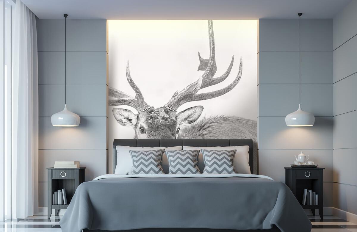Hert op witte achtergrond 8