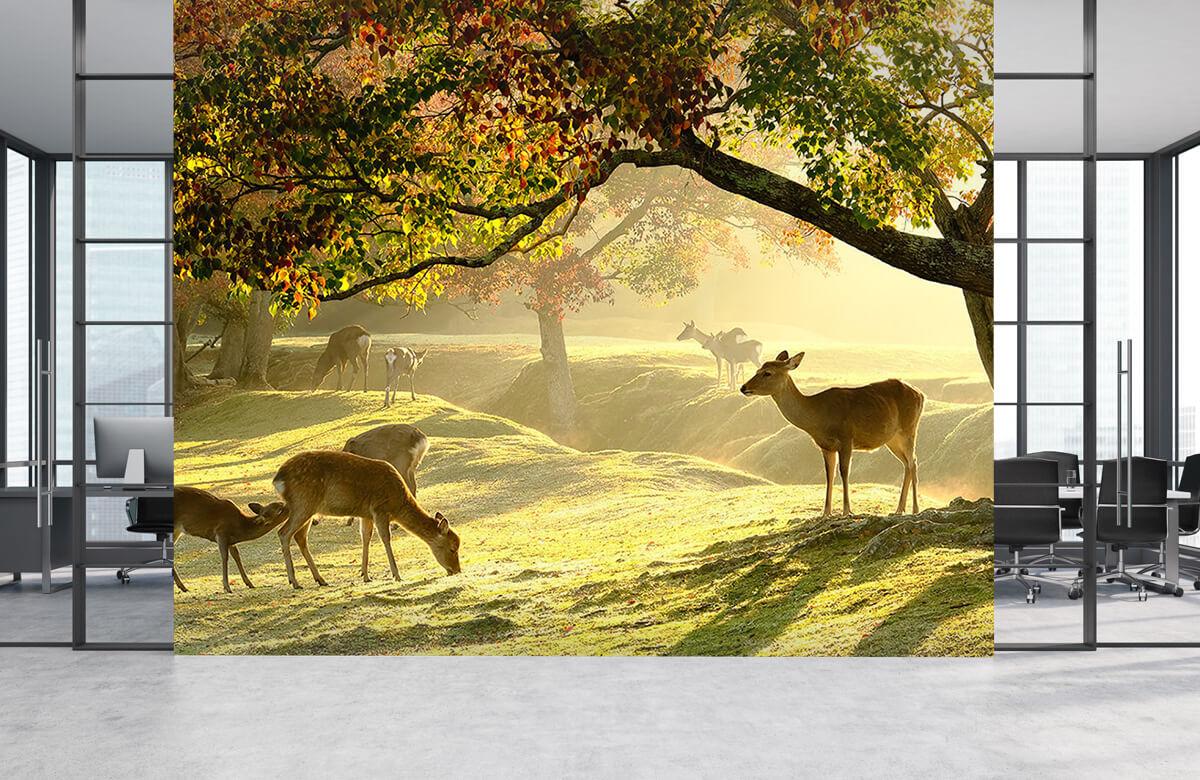 Herten in een veld 6