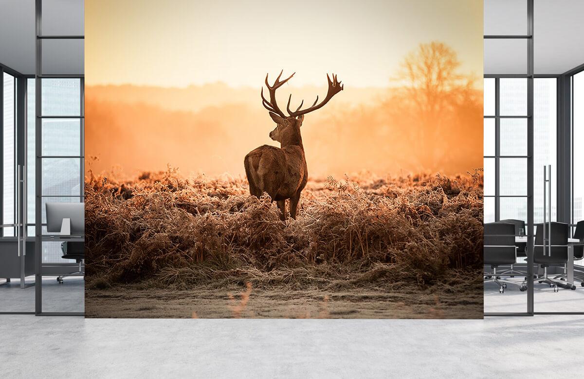 Hert bij zonsopkomst 4