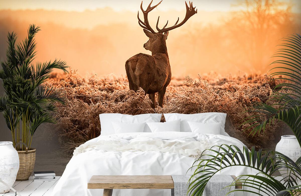 Hert bij zonsopkomst 2