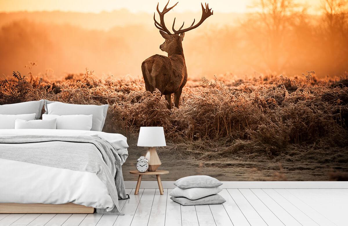 Hert bij zonsopkomst 6