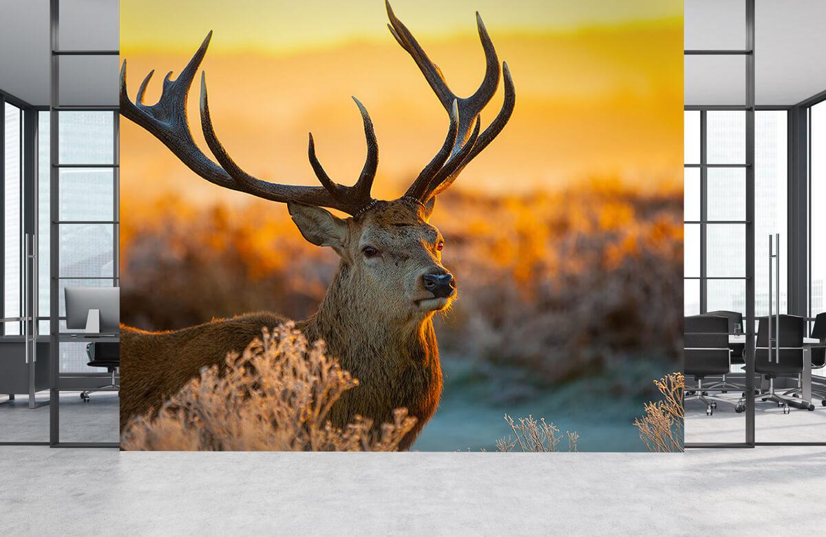 Hert in natuurgebied 7