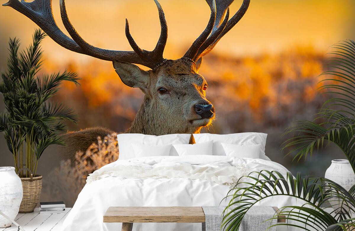 Hert in natuurgebied 10