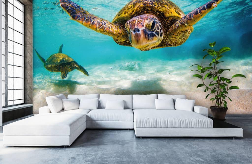Zeedieren - Zeeschildpad in de oceaan - Slaapkamer 1