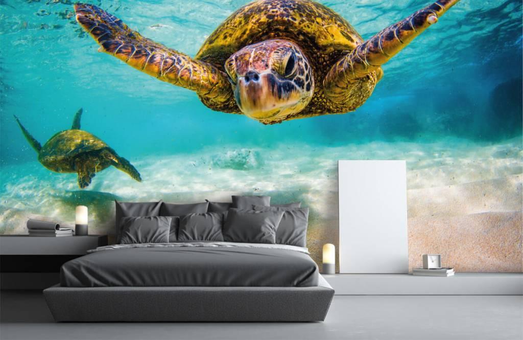 Zeedieren - Zeeschildpad in de oceaan - Slaapkamer 2