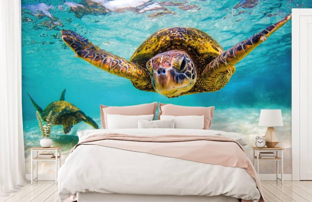 Zeedieren - Zeeschildpad in de oceaan - Slaapkamer 3