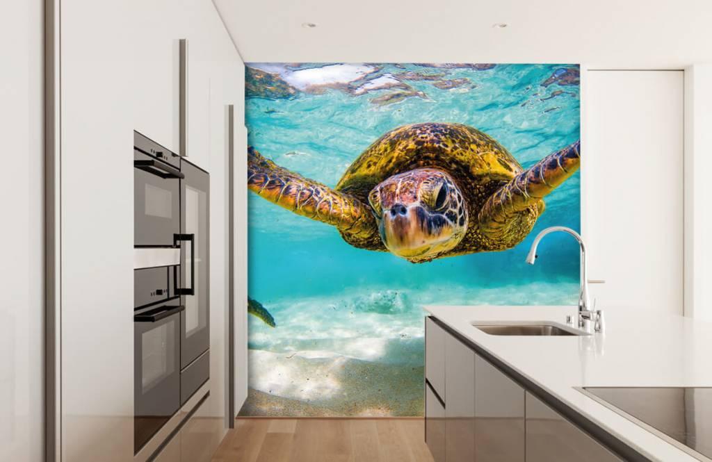Zeedieren - Zeeschildpad in de oceaan - Slaapkamer 4