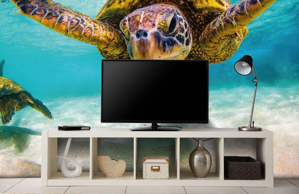 Zeedieren - Zeeschildpad in de oceaan - Slaapkamer 5