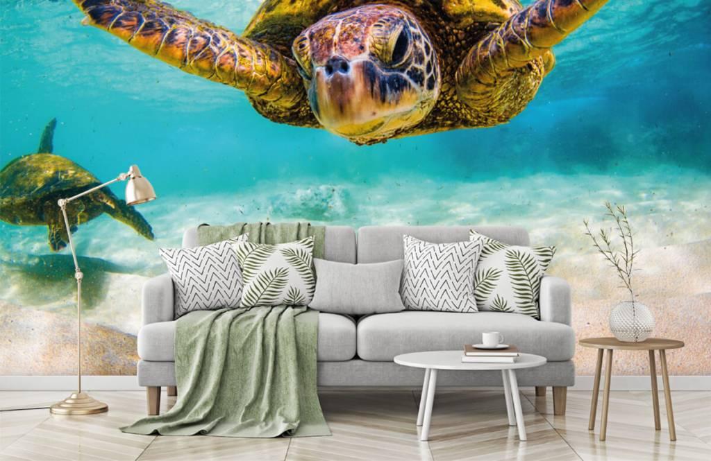 Zeedieren - Zeeschildpad in de oceaan - Slaapkamer 7